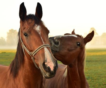 pferde-sortiment-praxmayer-salzburg